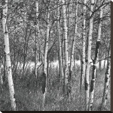 Birch Forest Stretched Canvas Print by Erin Clark