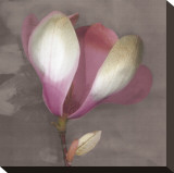 Magnolia Stretched Canvas Print by Erin Clark