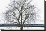 Manhattan Bridge Span with Tree Toile tendue sur châssis par Erin Clark