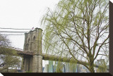 Brooklyn Bridge and Willow Stretched Canvas Print by Erin Clark