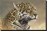 Jaguar Stretched Canvas Print by Kalon Baughan
