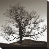 Solemn Tree Stretched Canvas Print by Erin Clark
