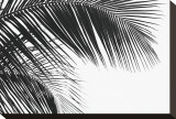 Palms, no. 11 Stretched Canvas Print by Jamie Kingham