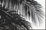 Palms 3 Reproduction transférée sur toile par Jamie Kingham