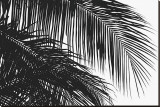 Palms 3 Stretched Canvas Print by Jamie Kingham