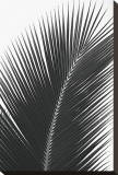 Palms, no. 14 Stretched Canvas Print by Jamie Kingham
