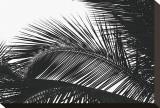 Palms, no. 13 Reproduction sur toile tendue par Jamie Kingham