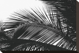 Palms, no. 13 Stretched Canvas Print by Jamie Kingham