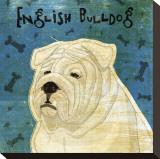 English Bulldog Stretched Canvas Print by John Golden