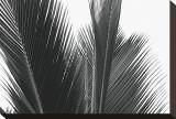 Palms, no. 15 Reproduction transférée sur toile par Jamie Kingham