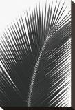 Palms, no. 14 Reproduction transférée sur toile par Jamie Kingham