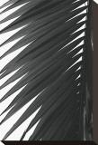Palms, no. 7 Reproduction transférée sur toile par Jamie Kingham