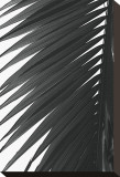 Palms, no. 7 Stretched Canvas Print by Jamie Kingham