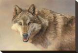 Wolf Portrait Stretched Canvas Print by Kalon Baughan