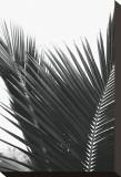 Palms, no. 12 Reproduction transférée sur toile par Jamie Kingham