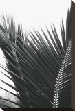 Palms, no. 12 Stretched Canvas Print by Jamie Kingham