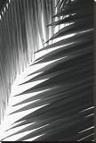 Palms, no. 6 Reproduction transférée sur toile par Jamie Kingham
