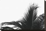 Palms, no. 2 Reproduction sur toile tendue par Jamie Kingham
