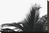 Palms, no. 2 Stretched Canvas Print by Jamie Kingham