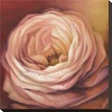 Rose Portrait Impressão em tela esticada por Lisa Audit