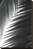 Palms, no. 6 Stretched Canvas Print by Jamie Kingham