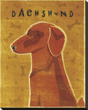 Dachshund (red) Stretched Canvas Print by John Golden