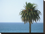 Palm at Moonlight Beach Stretched Canvas Print by Jenny Kraft
