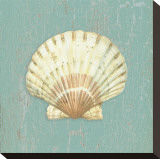 Scallop Shell Stretched Canvas Print by Lisa Danielle