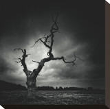 The Last Tree Stretched Canvas Print by Marcin Stawiarz