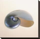 Polished Nautilus Opspændt lærredstryk af Tom Artin