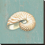 Nautilus Stretched Canvas Print by Lisa Danielle