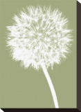 Dandelion (khaki) Stretched Canvas Print by Jenny Kraft