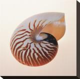 Nautilus Opspændt lærredstryk af Tom Artin