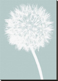 Dandelion (blue) Stretched Canvas Print by Jenny Kraft