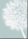 Dandelion Crop (blue) Stretched Canvas Print by Jenny Kraft