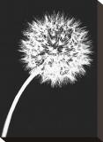 Dandelion Tilt Reproducción en lienzo de la lámina por Jenny Kraft