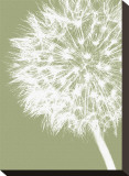 Dandelion Crop (khaki) Stretched Canvas Print by Jenny Kraft