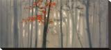 Fall Foliage Stretched Canvas Print by S. Garrett