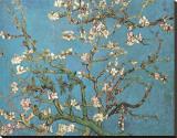 Ramas de almendros en flor, Saint Rémy, c.1890 Reproducción en lienzo de la lámina por Vincent van Gogh