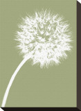 Dandelion Tilt (khaki) Stretched Canvas Print by Jenny Kraft
