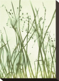 Watery Grasses I Reproduction transf&#233;r&#233;e sur toile par Jenny Kraft