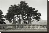 Cypress Trees and Balusters Opspændt lærredstryk af Christian Peacock