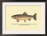 The Golden Trout of Volcano Creek Prints by H.h. Leonard