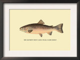 The Rainbow Trout Print by H.h. Leonard