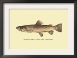 The Brown Trout Poster by H.h. Leonard