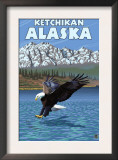 Bald Eagle Diving, Ketchikan, Alaska Posters