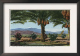 California - Dates Growing in the Coachella Valley Prints