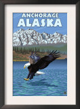 Bald Eagle Diving, Anchorage, Alaska Print