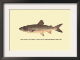 The Great Lake Trout Prints by H.h. Leonard
