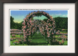 Hartford, Connecticut - Elizabeth Park View of the Rose Arches Prints
